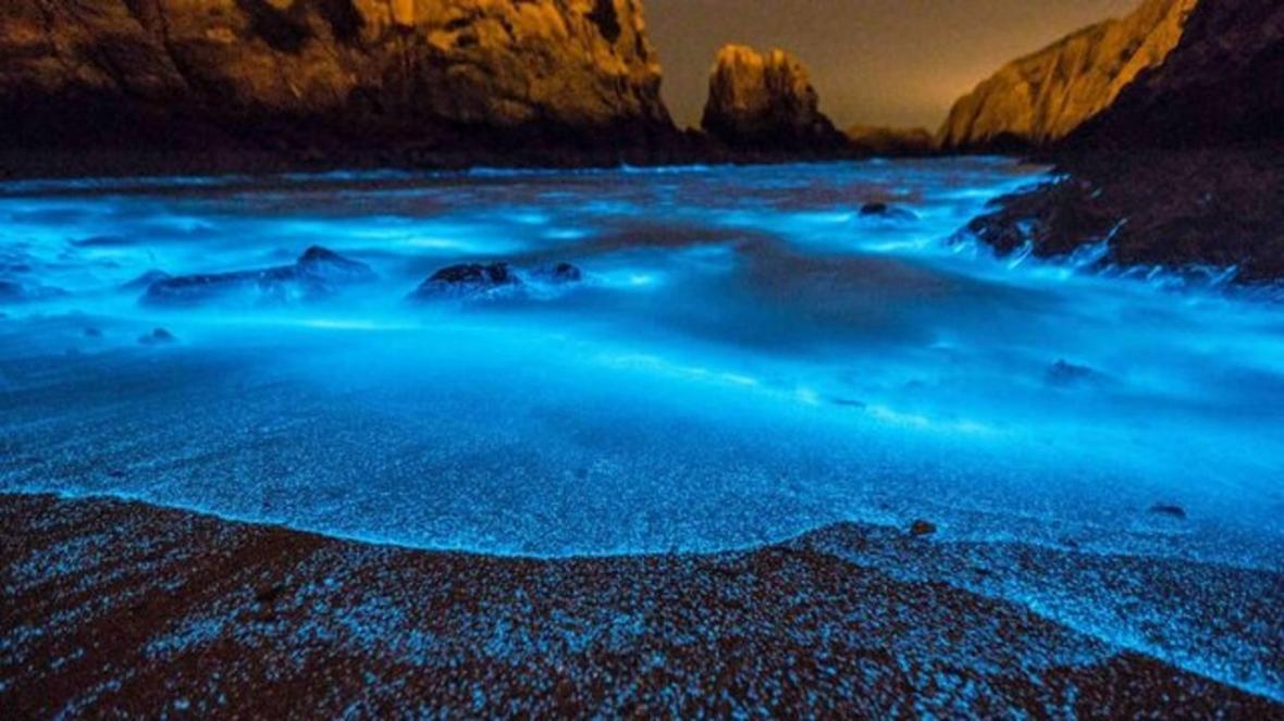 علت نور های آبی عجیب در برخی سواحل چیست؟