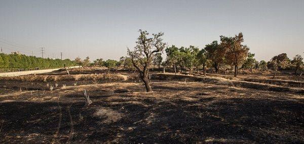 وقوع آتش سوزی در آبادترین نقطه باغستان سنتی قزوین