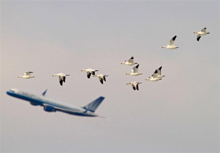 افزایش 36 درصدی پرواز های عبوری از آسمان ایران