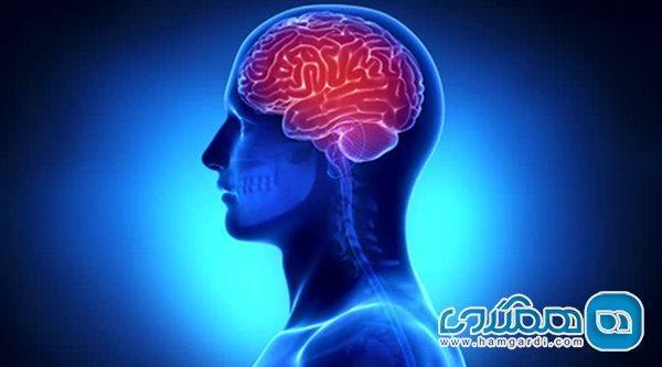 افت توان مغزی مردان در ساعتی تعیین از روز